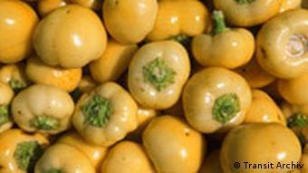 Landwirtschaft in Ungarn Paprika Ernte
