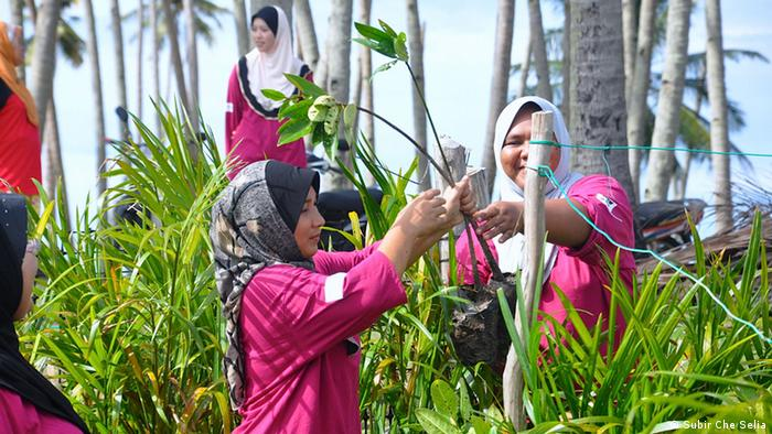 Women with the PEWANIS project planting plants