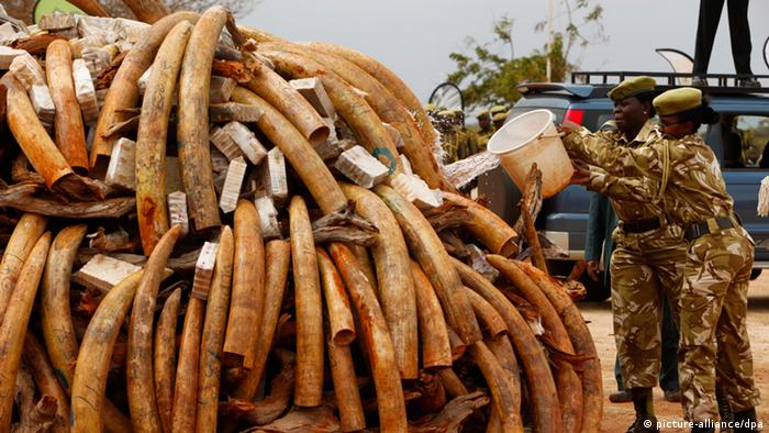 Piles of tusks
