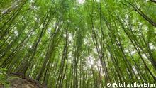 Bäume von untern fotografiert. Fotolia/gibavision