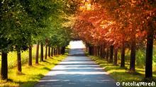 Herbstanfang Symbol