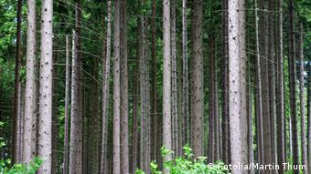 Symbolbild Wald