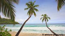 Strand Seychellen Palme