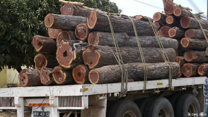 Lastwagen Holz Mosambik Baumstamm Guro Manica Waldwirtschaft Export (DW/J. Beck)