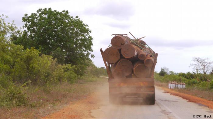 Toros de madeira a saírem de Guro, província central de Manica