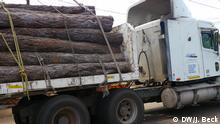 Lastwagen Holz Mosambik Baumstamm Guro Manica Waldwirtschaft Export