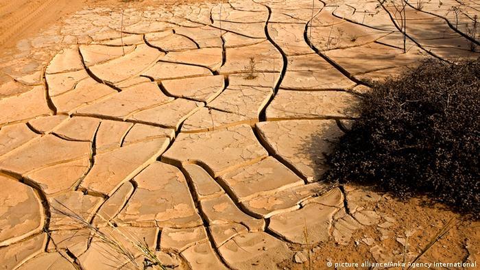 DROUGHT IN DESERT, NEAR WALVIS BAY IN NAMIBIA