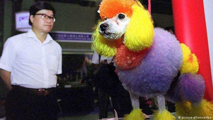 China Hund bunt (picture-alliance/dpa)