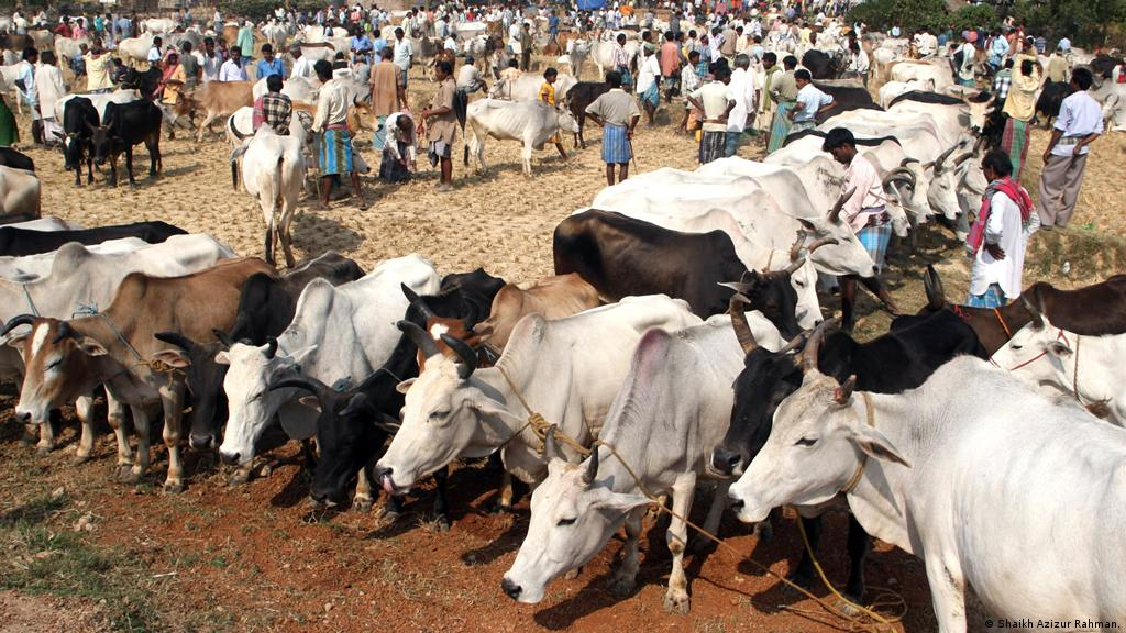 Indian government plans to issue ID cards to cows | Asia| An