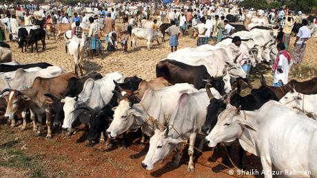 Indien Schmuggel RInder Markt