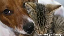 Symbolbild Liebe Glück Hund und Katze