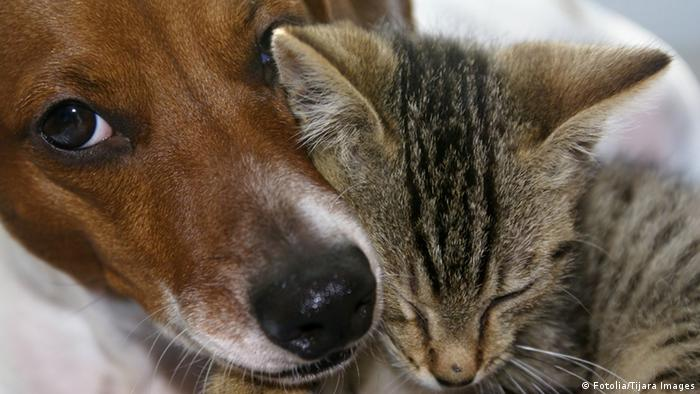cuddle1-rb cat; dog; animals; pets; love; friendship; couples Fotolia_3860607 Tijara Images - Fotolia 2010