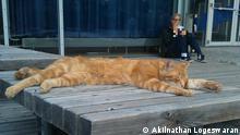 Campus-Katze der Universität Augsburg