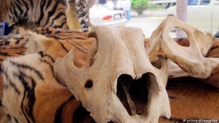Tiger skins and bones seized in Thailand (photo: EPA/FREELAND FOUNDATION)