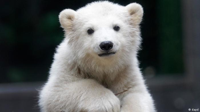 No, no se trata de Knut