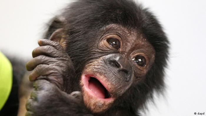 Bildergalerie Die süßesten Tiere 2012