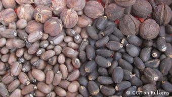 The brown seed variety