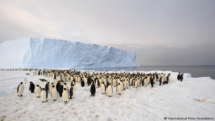 A penguin colony of about 1,000 individuals in Antarctica