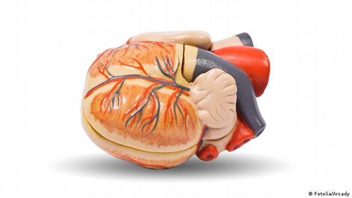 Symbolbild Organspende Herz