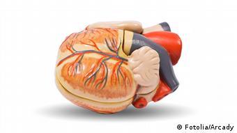 Human heart anatomy model, medical visual aid Copyright: Fotolia/Arcady