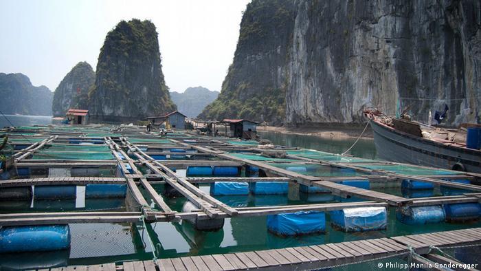 Aquakultur / Schwimmende Fischzucht, Ha Long, Vietnam