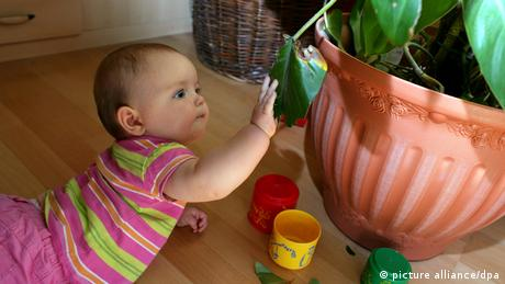 A baby plays on the floor beside a plant in a home in Germany. (Photo: Patrick Pleul)