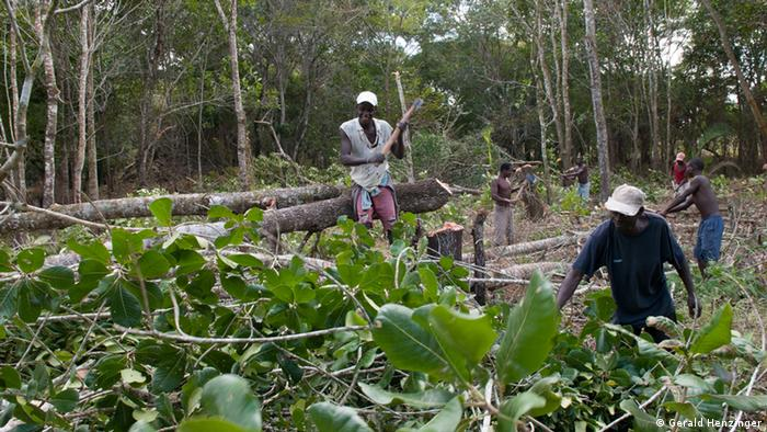 Deforestation in Mozambique (Copyright: Gerald Henzinger)