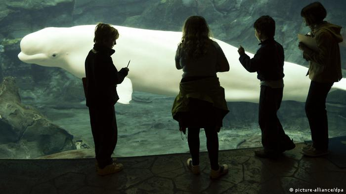epa03452781 A beluga whale passes by young visitors in the Cold Water Quest exhibit at the Georgia Aquarium in Atlanta, Georgia, USA, 30 October 2012. The Georgia Aquarium, which opened in 2005, features more than 10 million gallons of water and over 60 different exhibits. EPA/ERIK S. LESSER