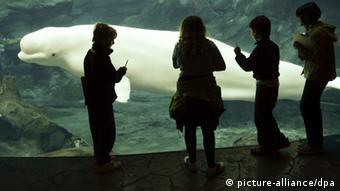 Μια παρόμοια φάλαινα βρέθηκε κάποτε στο Ρήνο
