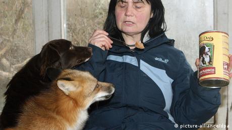 Bildergalerie Ungewöhnliche Tierfreundschaften