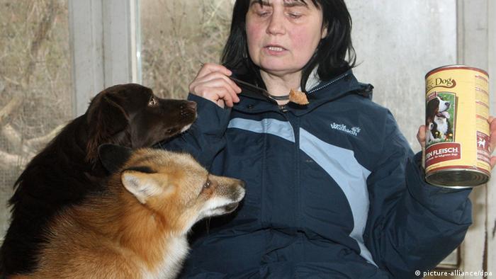 صداقة بين ثعلب وكلب!