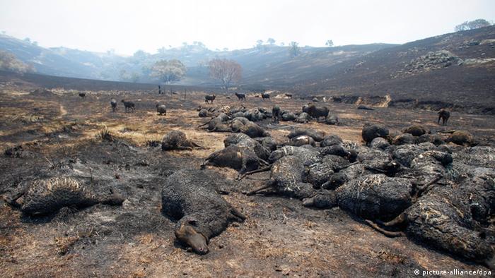 Australien Buschbrände (picture-alliance/dpa)