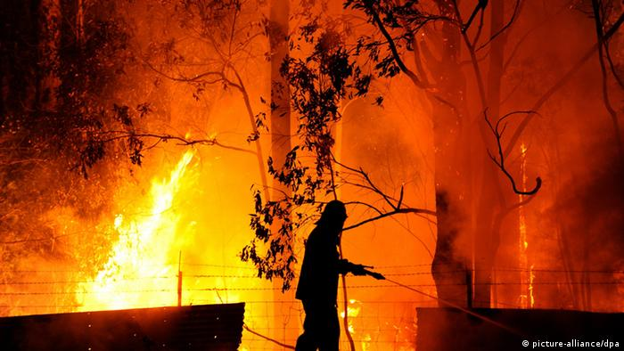 Tree being burned in Australian bushfire (Photo: DW)