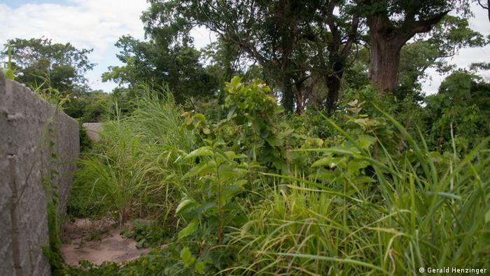Mata no distrito de Cheringoma (foto de arquivo)