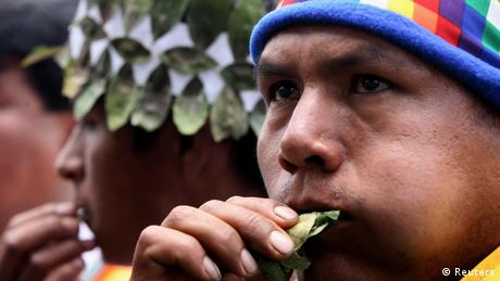 Chewing on a coca leaf (Reuters)