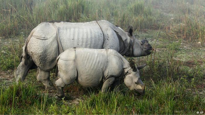 Rhinos in Assam, India (Photo:Anupam Nath/AP/dapd)