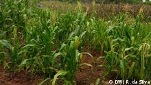 Mosambik Mais