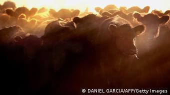 Argentinien Rinderherde