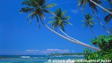 Palmenstrand Sri Lanka