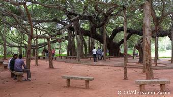 El árbol Banyan es el símbolo de la vida en Auroville.