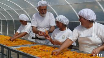 SES-Experte Volker Hache begutachtet in Peru sonnengetrocknete Papaya-Schnitze (Foto: SES)