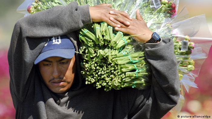 A Mexican man wearing a gray sweatshirt and blue baseball hat struggles under the burden of a huge bundle of flowers carried on one shoulder (Photo: UPI Photo/Earl Cryer/Landov)