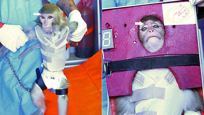 Iran Kombo Affe Raumfahrt nachher mit Pfeil