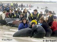 El cambio climático es una nueva amenaza para las ballenas.