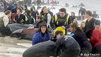 75 Wale an südaustralischer Küste gestrandet