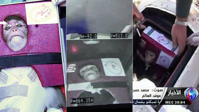 Bildergalerie Iran Affe im Weltraum Kombo
