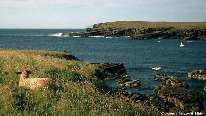 Großbritannien Schottland Orkneyinseln Schaf Insel Westray (picture-alliance/ANE Edition)