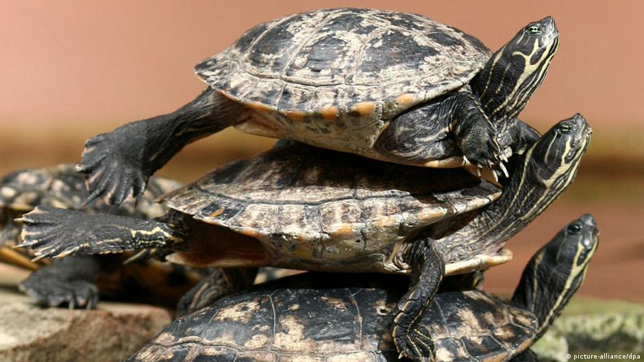 Schildkröte Trio Sonne