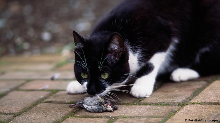 A cat hunts a bird (Fotolia/Vibe Images)