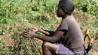 A woman holds a peanut branch in her hand (Foto: CC BY 2.0: Alex E. Proimos)
